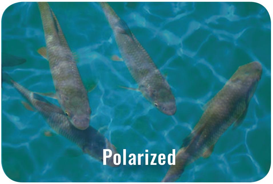 Polarized lens example
